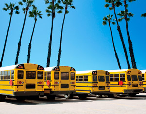 school-bus-myths